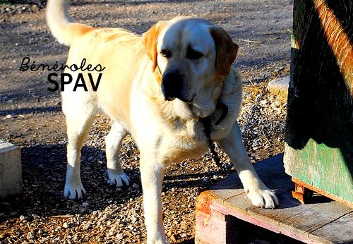 Bienvenue sur le blog des bénévoles de la S.P.A.V dans Message des bénévoles colt0123