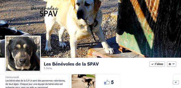 Les bénévoles S.P.A.V sont aussi sur Facebook !